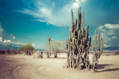 Desert Cactus Family - muurdecoratie natuur