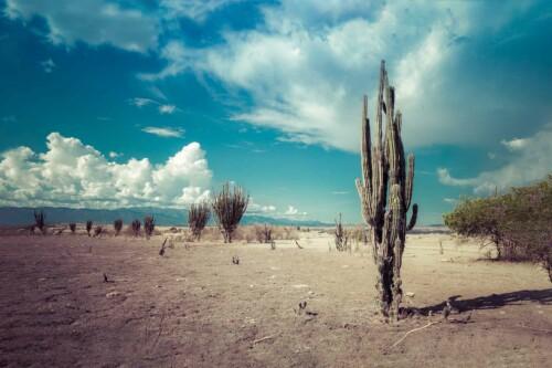 Desert Cactus - natuur muurdecoratie
