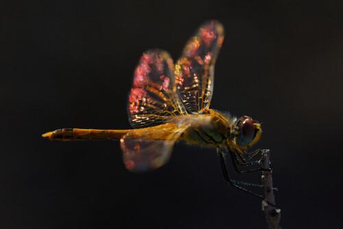 Dragonfly - dieren op wanddecoratie