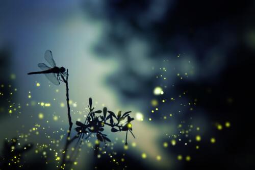 Magic Dragonflies - dieren op wanddecoratie