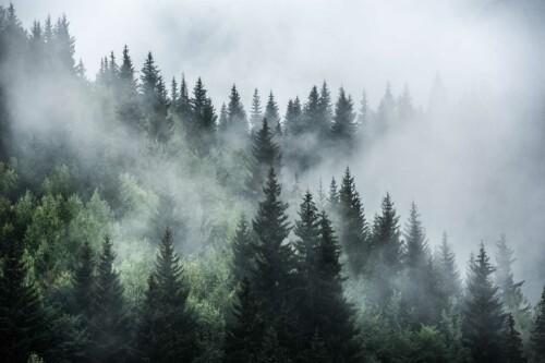 Misty Forest - natuur muurdecoratie
