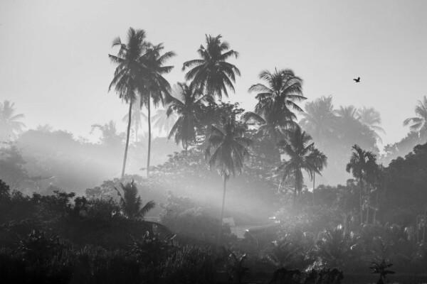 Palm Village - natuur muurdecoratie
