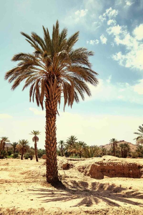 Palmtree - natuur wand en muurdecoratie