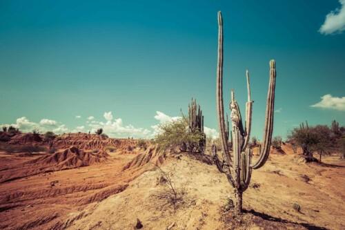 Red Desert Cactus - muurdecoratie natuur