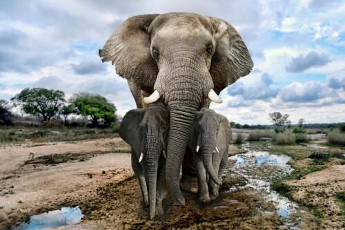 Elephant Family - dieren op wanddecoratie