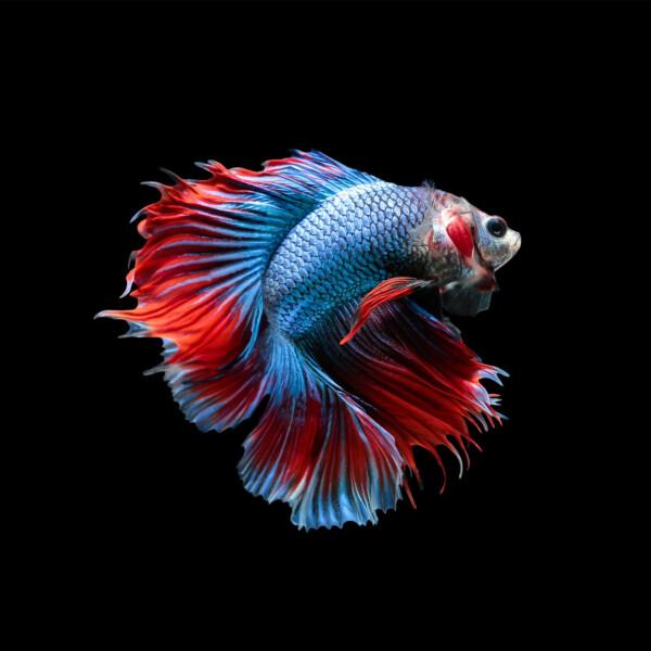 Fish Bruce - onderwaterleven wanddecoratie