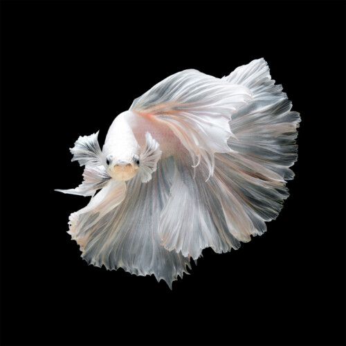 Fish Wayla - onderwaterleven wanddecoratie