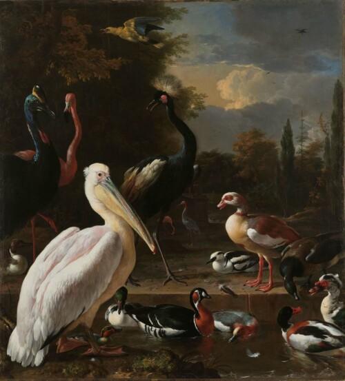 Het drijvend veertje - Melchior d' Hondecoeter