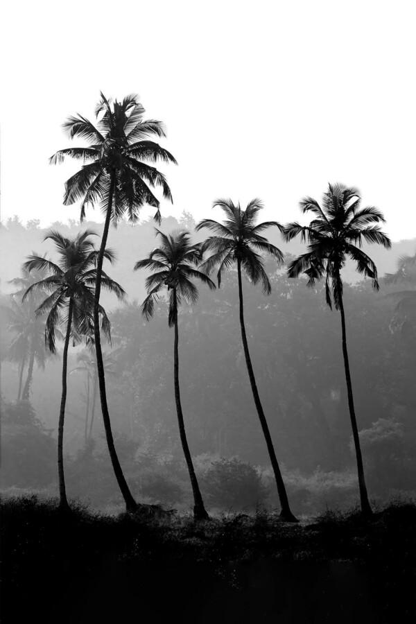 Palm Trees- natuur muurdecoratie