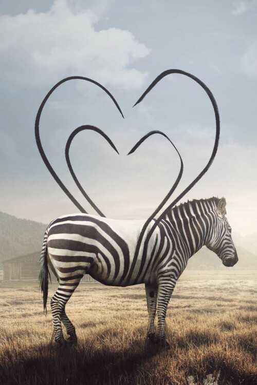 Heart Striped Zebra op wanddecoratie