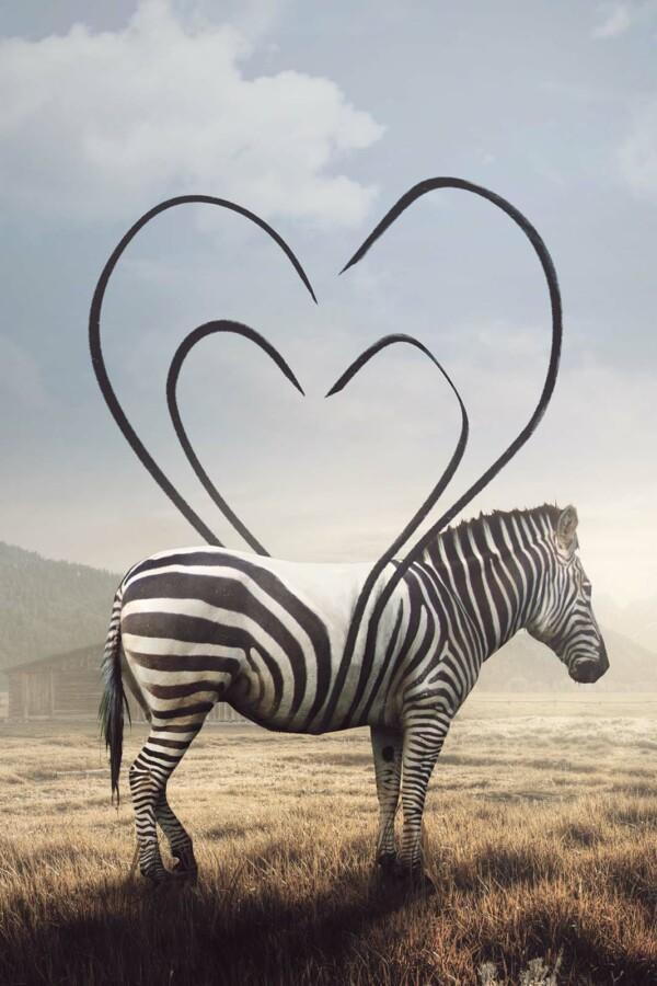 Heart Striped Zebra op wanddecoratie