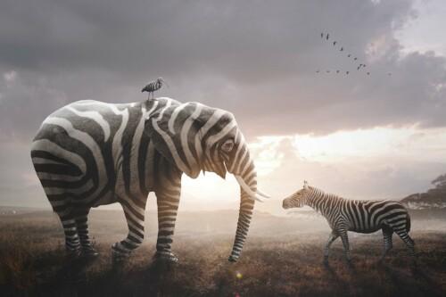 Wearing Zebra Stripes op muurdecoratie