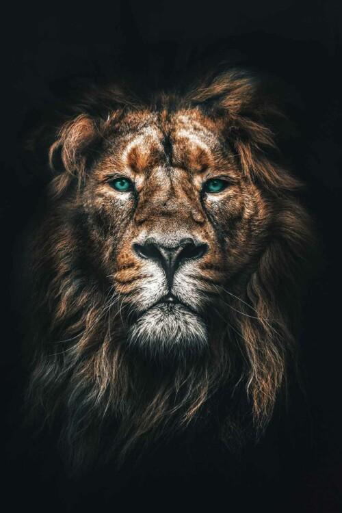lion dieren op wanddecoratie