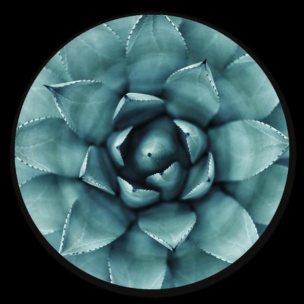 Agave Plant - ronde natuur muurdecoratie
