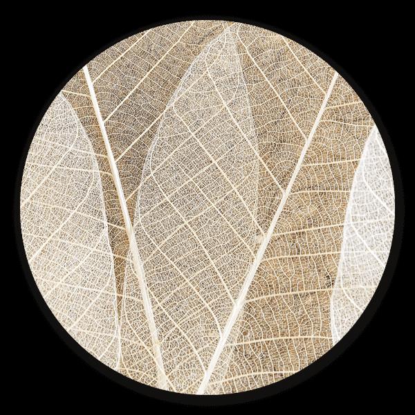 Leaf Texture - ronde natuur muurdecoratie