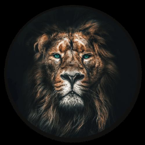 Muurcirkel Lion - dieren op ronde wanddecoratie.