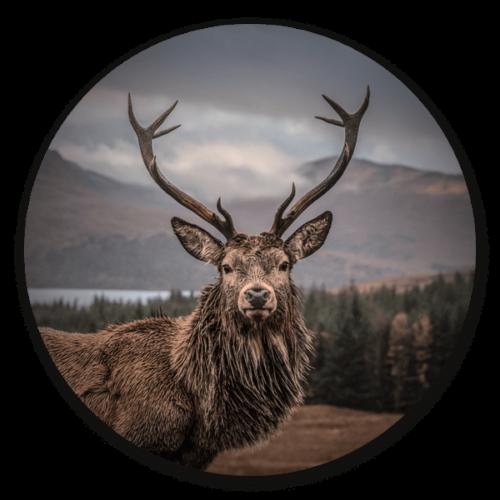 Muurcirkel Scottisch Deer - dieren op ronde wanddecoratie.