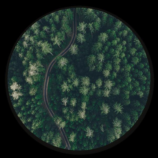 The Green Road - ronde natuur muurdecoratie