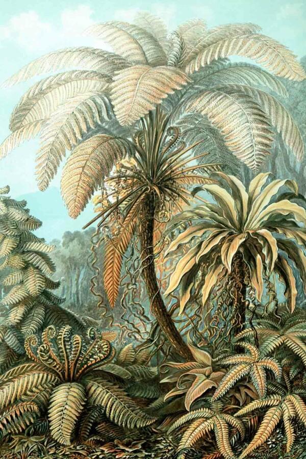 Wanddecoratie Filicinae in het kleur van Ernst Haeckel
