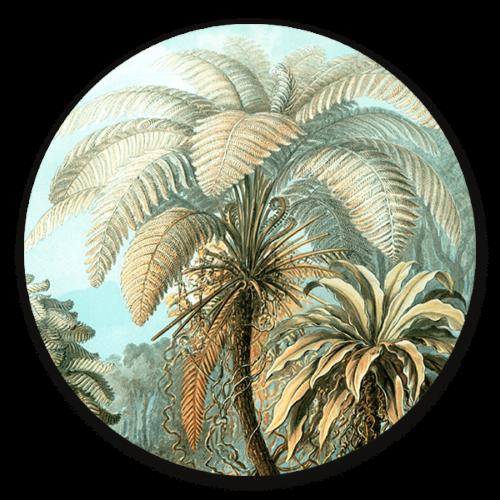 Muurcirkel Filicinae in het kleur van Ernst Haeckel.