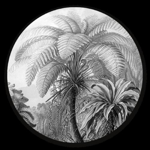Muurcirkel Muurcirkel Filicinae zwart wit van Ernst Haeckel