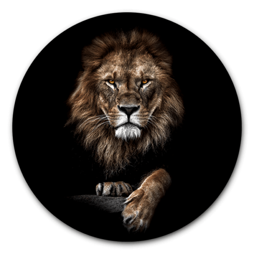 Muurcirkel Lion King