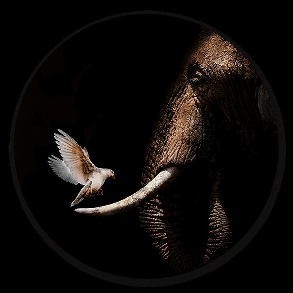 Muurcirkel Elephant with Pigeon