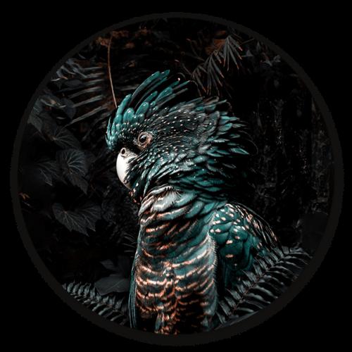 Muurcirkel Jungle Cockatoo