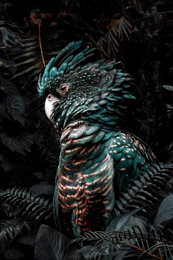 Wanddecoratie Jungle Cockatoo