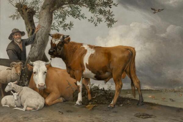 De stier van Paulus Potter