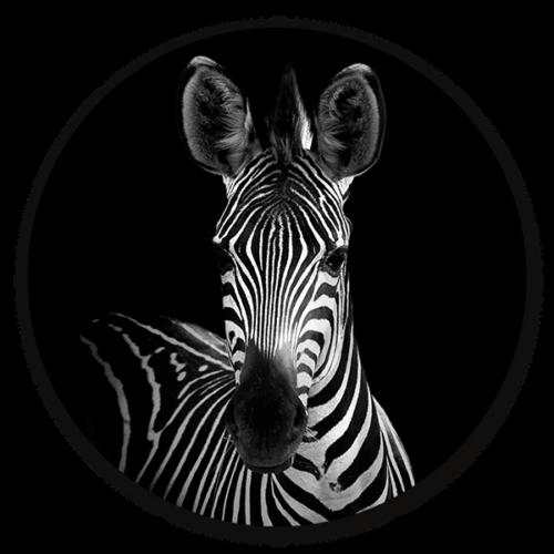 Muurcirkel Zebra Portrait