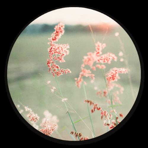 Muurcirkel Pink Grass