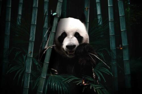Jungle Panda
